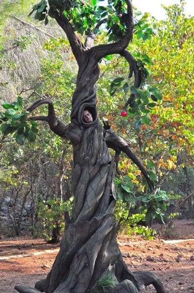 פסל חי עץ